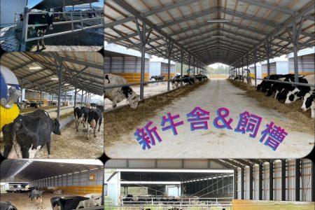 新牛舎稼働★